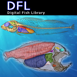 Digital Fish Library